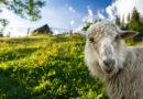 Wollwissen: 4 faszinierende Fakten über die Selbstreinigungskräfte von Wolle