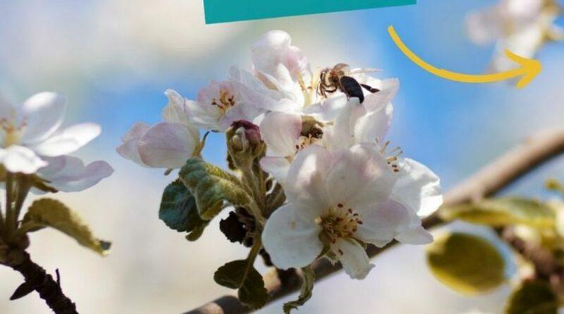 Babys Natur Gewinnspiel zur Bienenwoche (Bildquelle: Babysnatur | https://www.instagram.com/p/CPM_TVeCzNo/)